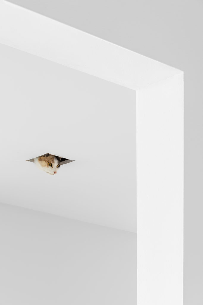 Eva & Franco Mattes, Ceiling Cat