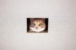 Eva and Franco Mattes, Ceiling Cat
