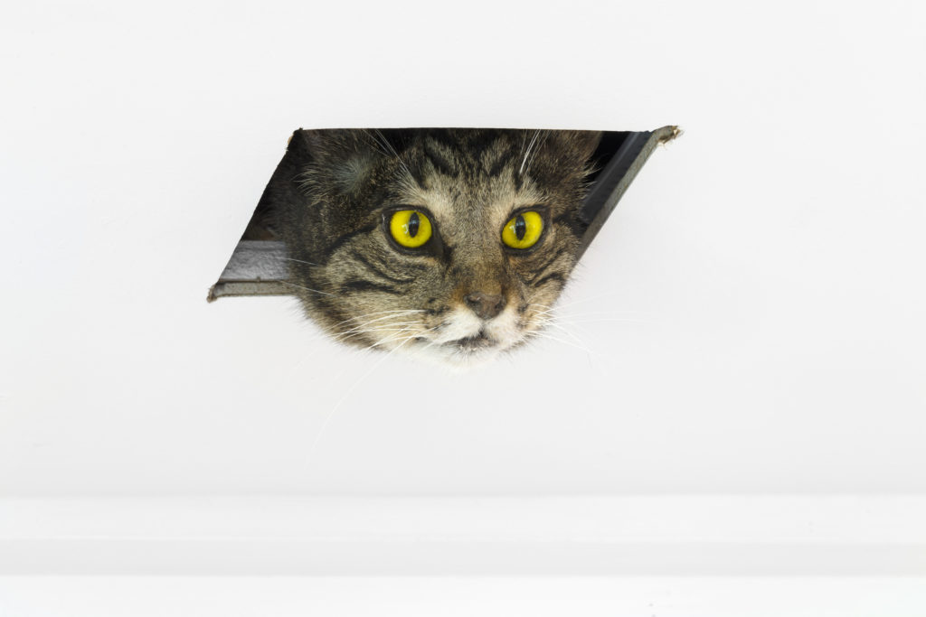Eva & Franco Mattes, Ceiling Cat