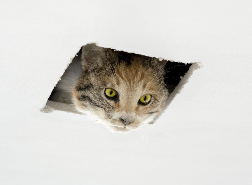 Eva and Franco Mattes, Ceiling Cat