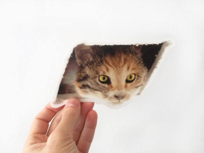 ceiling-cat-sticker